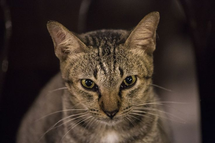 """The Hypno-Cat"" Photo by Emanuele Del Bufalo -- National Geographic Your Shot"
