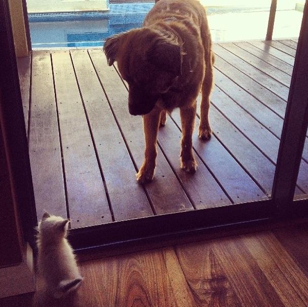 Bernard meets Nala for the first time