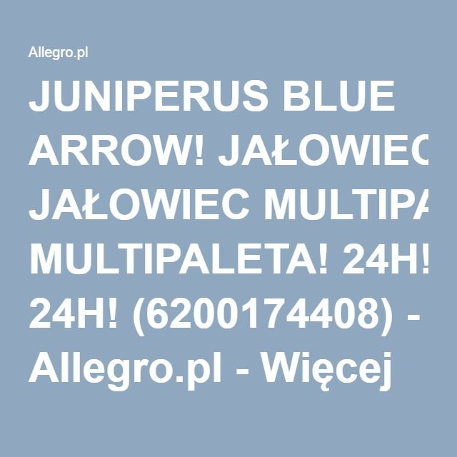 JUNIPERUS BLUE ARROW! JAŁOWIEC MULTIPALETA! 24H! (6200174408) - Allegro.pl - Więcej niż aukcje.