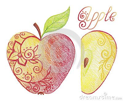 Hand drawn apple: whole and half. Vector illustration