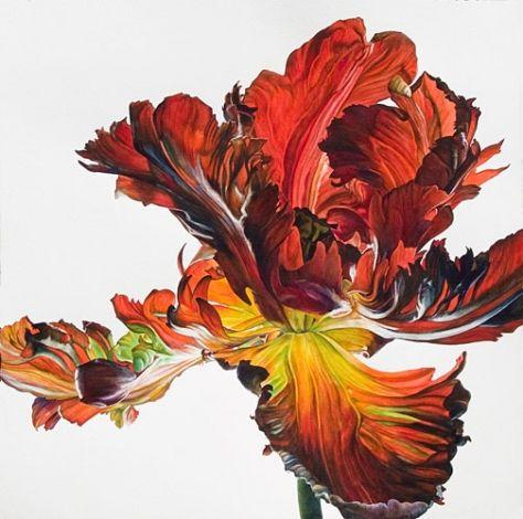 Rosie Sanders. Red Parrot Tulip