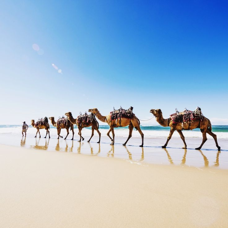 If you ever find yourself in Port Macquarie I strongly recommend a camel ride down the beach with Port Macquarie camel safari's. This was...