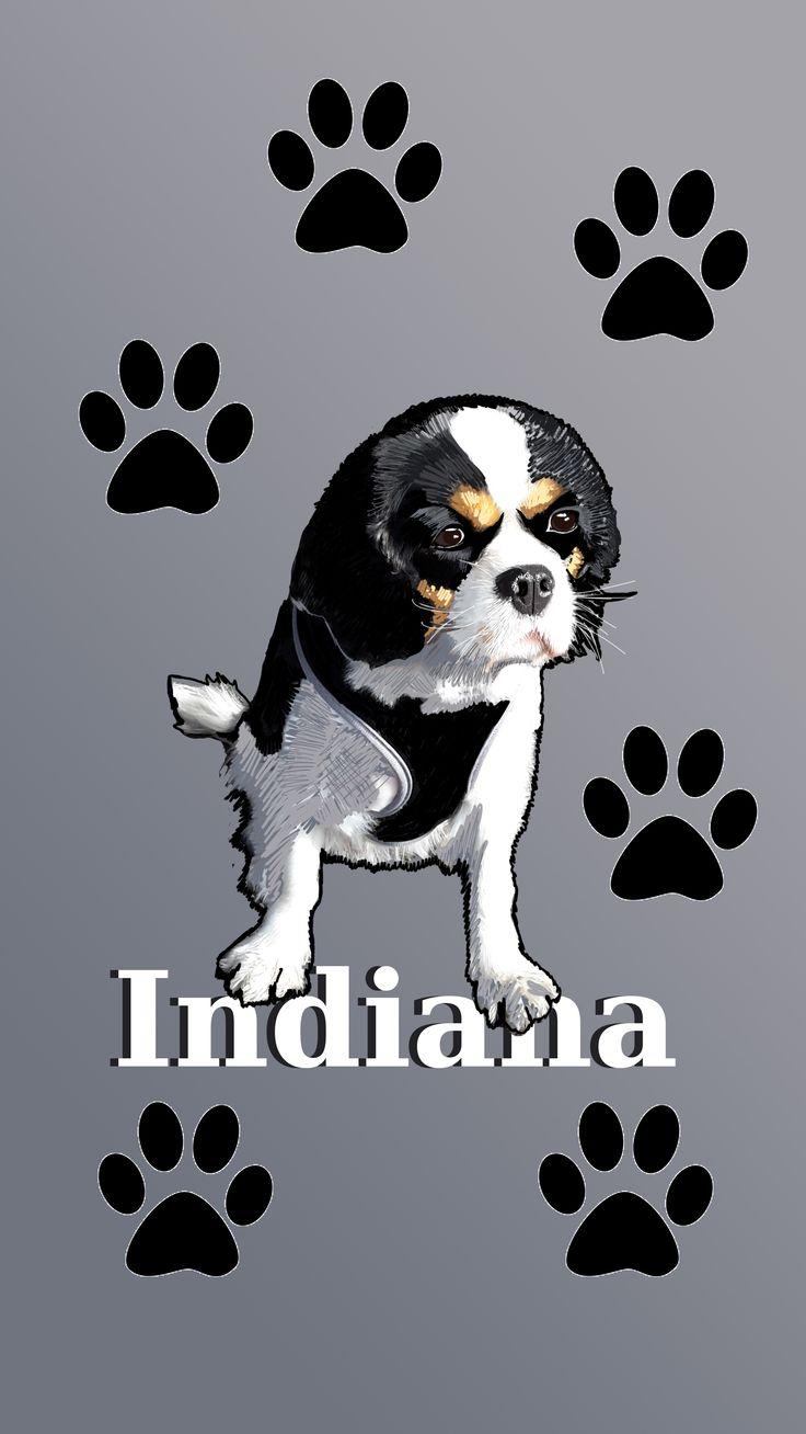 Tout premier portrait d'Indiana en infographie made by Moduscray. www.moduscray.com.