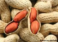 peanut allergy cure