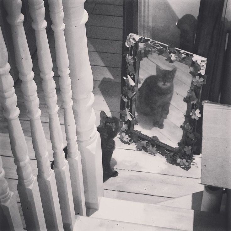 #bengalcat #mirror #reflection #stairs