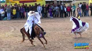 caballo de paso peruano - YouTube