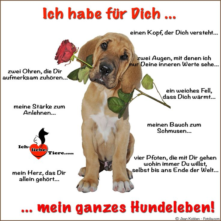 Ich habe für Dich mein ganzes Hundeleben! >> http://www.ich-liebe-tiere.com/ <<