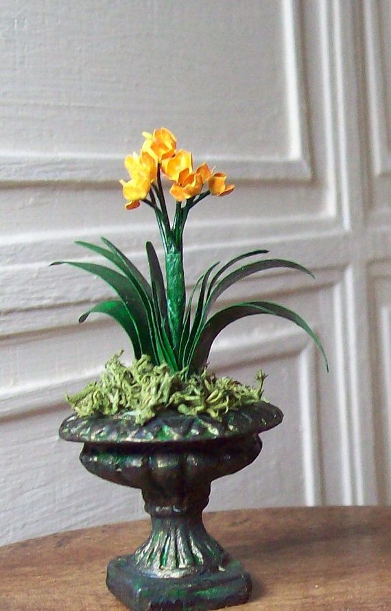 17 best images about clivia on pinterest gardens natal and shade plants. Black Bedroom Furniture Sets. Home Design Ideas