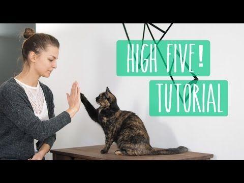 So lernt eure Katze High Five! Katzentrick Tutorial – YouTube – mousefips