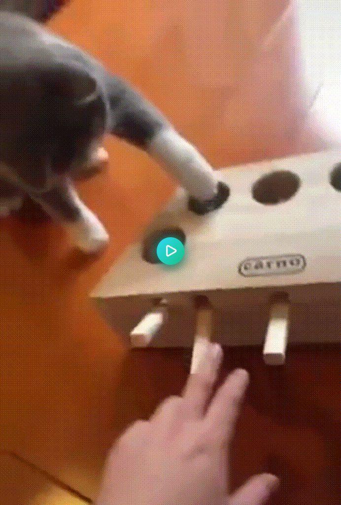 A prank box for cats https//ift.tt/2QLwKz4 Prank box