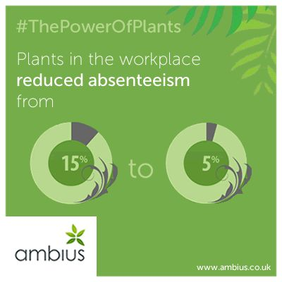 Plants in the workplace reduced absenteeism from 15% to just 5%