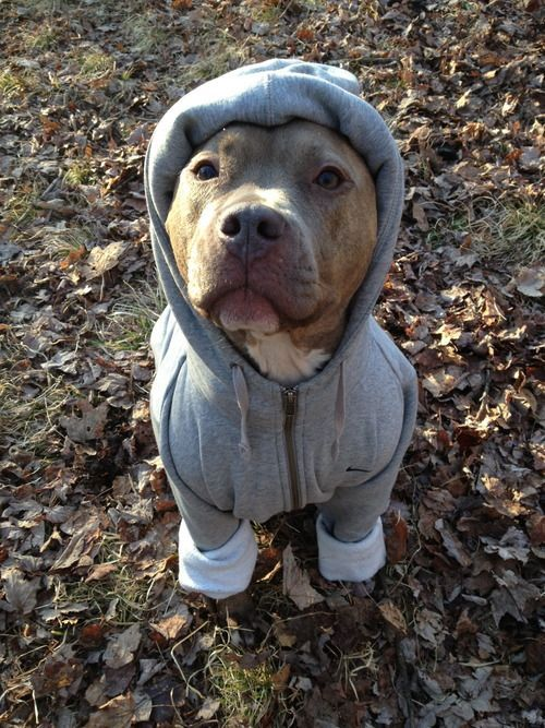 unsuccessfulmetalbenders:          we went upstate and my dog was being a butt and trying to swipe at fish in the lake and she fell in and when we dried her off she was still shivering so i put a sweater on her       omg SO FREAKING ADORABLE!!!! DEAN