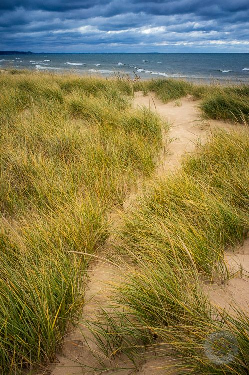 Lake Michigan Dune Grass, Ludington State Park, Michigan ~ Photo: Mark Graf