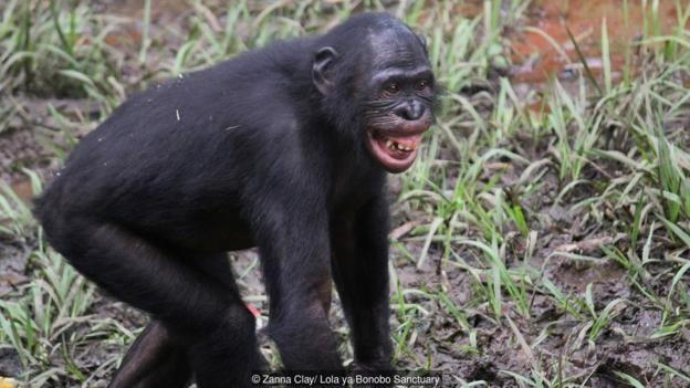 Bonobo (muzician)