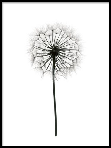 Fin botanisk plakat i svarthvitt.
