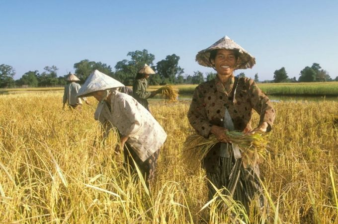 Transforming agriculture to address climate change and other global challenges