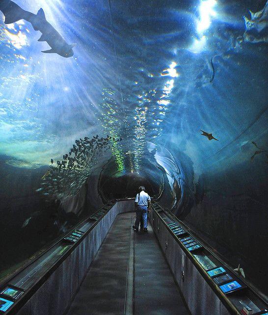 Aquarium of the Bay, SF