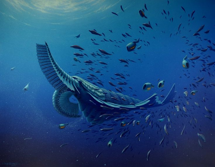 Artists%u2019 reconstruction of Tamisiocaris borealis, unearthed in the Sirius Passet formation in northern Greenland.