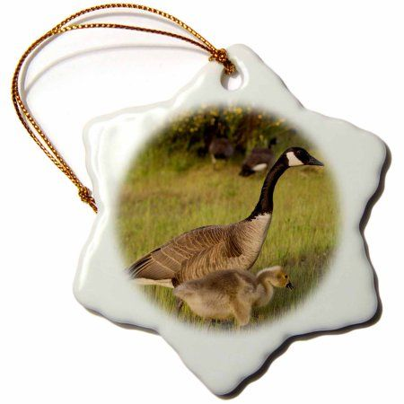 3dRose USA, Washington, Seattle. Canada goose adult watching its goslings., Snowflake Ornament, Porcelain, 3-inch