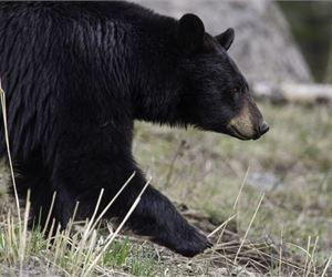 Teenager Woke To 'Crunching Sound' Of Bear Eating His Head