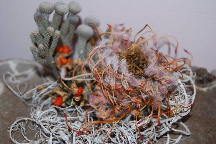 Pe structura de lichen crustos, folosind sarma decorativă, lâna si flori, am făcut un aranjament de birou de sine stătător pentru o comanda specială by Atelier Floristic Aleksandra concept Alexandra Crisan