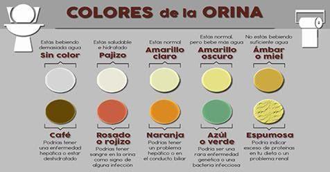 El color de la orina dice todo sobre tu salud. Esto es lo que significa su color y que podría andar mal en tu cuerpo! | Mi Mundo Verde