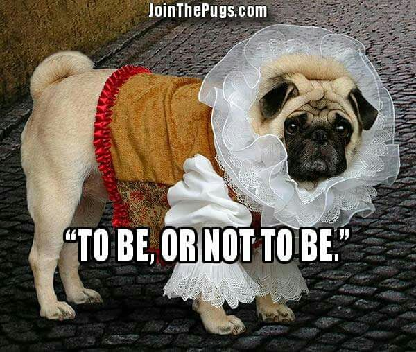"""""""'Tis always better to be a #pug!"""" www.jointhepugs.com #pugpower #pugsnotdrugs #pugpuppy #puglover #dogs #cuteness #pugs"""