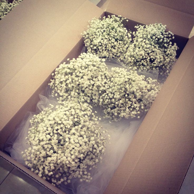 Yes. Baby's breath.