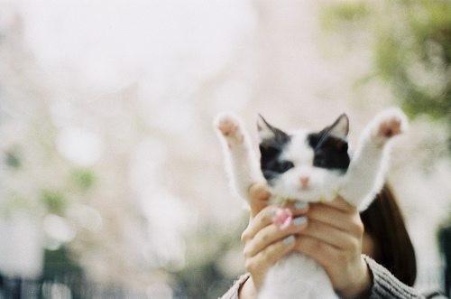 猫咪 萌物 插画 摄影 雪翼儿