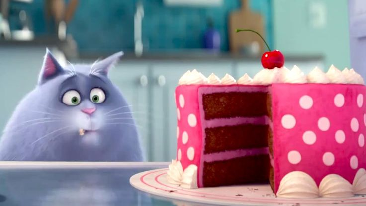 The Secret Life of Pets - Meet CHLOE the Cat - This is how I look at cake.