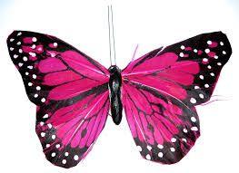 Resultado de imagen para mariposas monarcas moradas