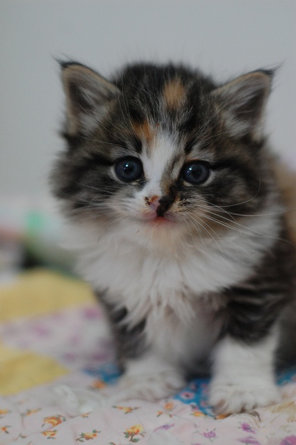Sweet Geraldine Dearborn from the Itty Bitty Kitty Committe