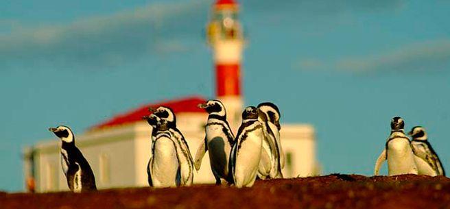 Cruceros Australis - Magdalena Island.  #travel #cruise #SouthAmerica #Patagonia #wildlife #penguins