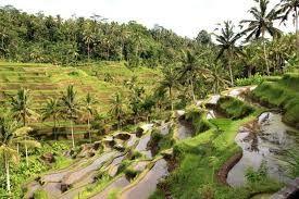 plantage Indonesië