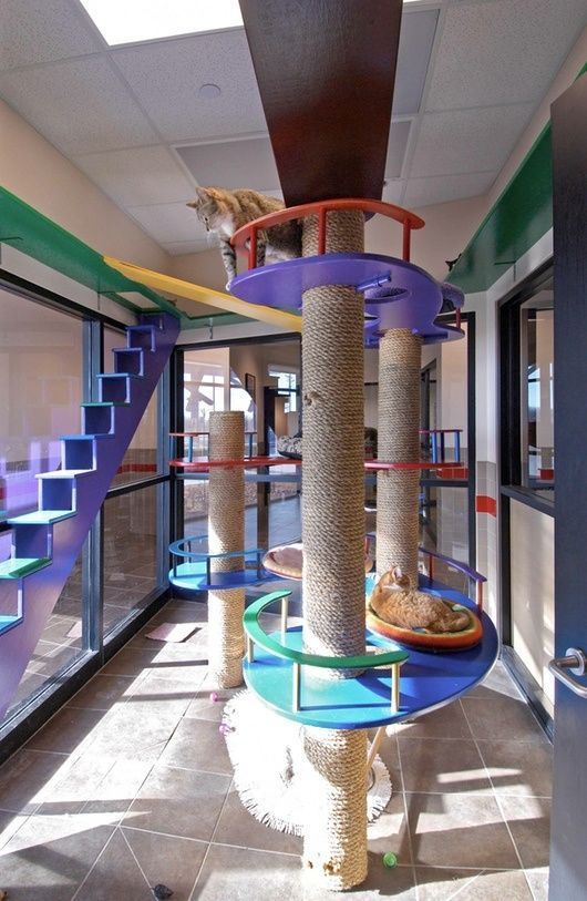 The ultimate cat room has DIY ideas anyone can use to make amazing cat stuff for their home or apartment.