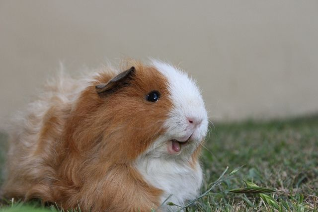 Hello, smiley piggie!