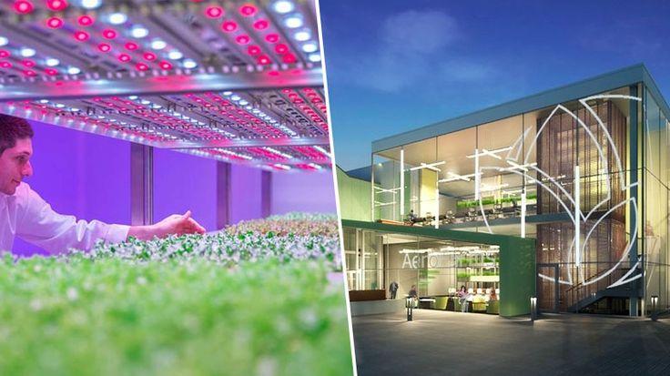 À New-York, une ferme verticale de 6500m² va produire 1000 tonnes de légumes par an