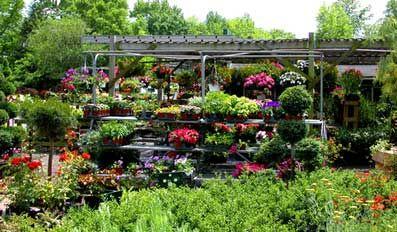 How to Start a Profitable Backyard Plant Nursery