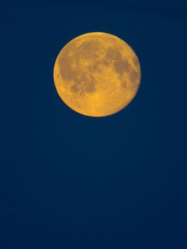 Rising Big Full Moon in a Dark Blue Sky in Autumn Photographic Print by John Eastcott & Yva Momatiuk at Art.com