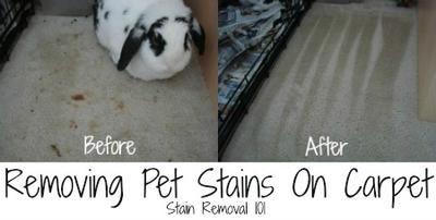 Removing Pet Stains On Carpet: Tips & Tricks