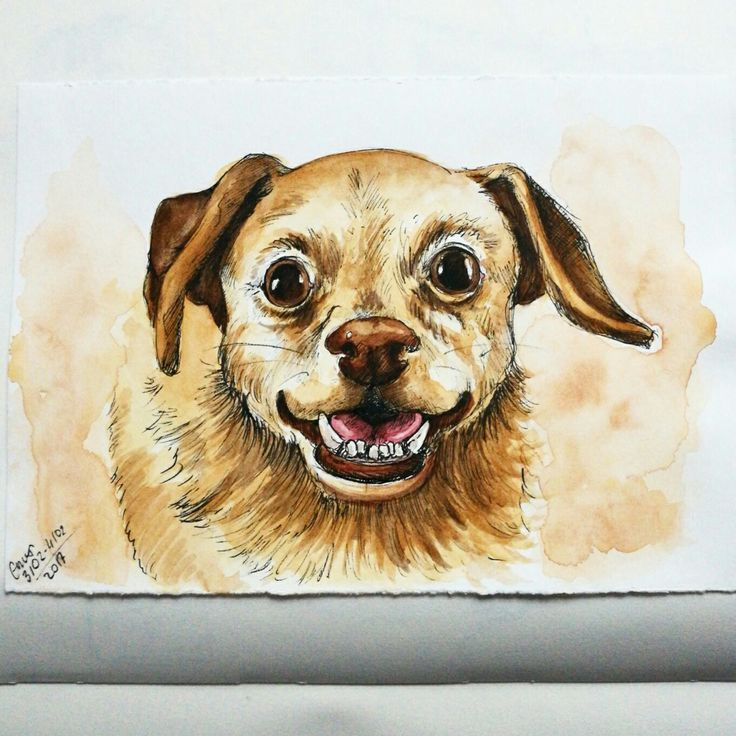 Daisy underbite watercolor and micron drawing by Magdalena Leszczyniak