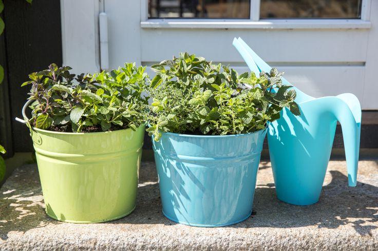 Jakie zioła najlepiej nadają się uprawy na parapecie? W jaki sposób je pielęgnować? Odpowiedź znajdziecie w najnowszym numerze SlowLife.