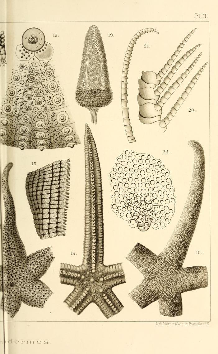 """Résultats scientifiques de la campagne du """"Caudan"""" dans le Golfe de Gascogne, août-septembre 1895 / - Biodiversity Heritage Library"""