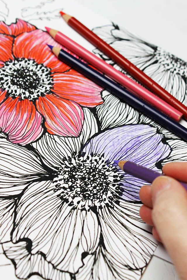 Best 25 Adult coloring ideas only on Pinterest Drawing