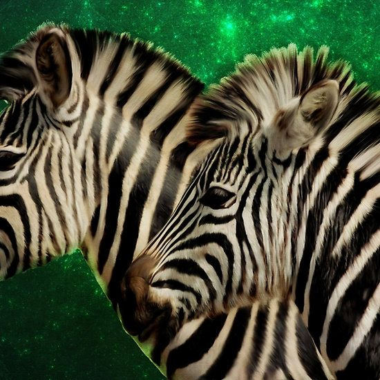 Twin zebras with green fractal star background by Tracey Everington of Tracey Lee Art Designs