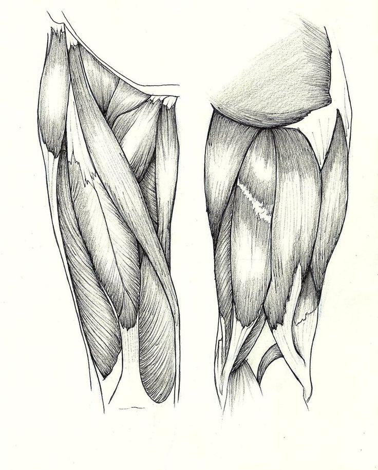 http://th00.deviantart.net/fs71/PRE/i/2012/291/e/a/anatomy_study__quadriceps_by_bournelach-d5i60zt.jpg