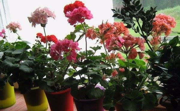 Світлина від Чудесные цветы. Beautiful flowers.