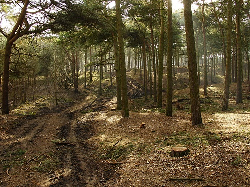 Formby Squirrel Reserve. Don't always get to see Red Squirrels there as they can hide!