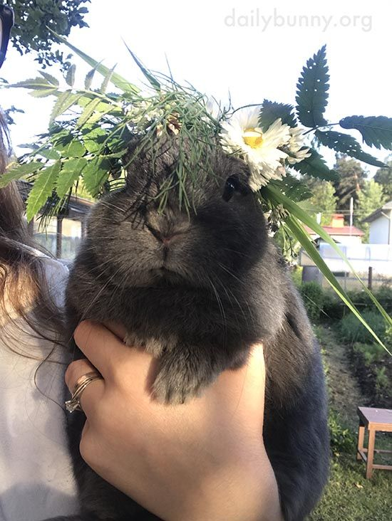 Bunny celebrates Midsummer with a tasty wreath - July 3, 2017