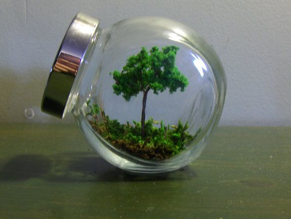 Railroad miniature tree placed among live moss. So dreamy...and super easy to maintain.